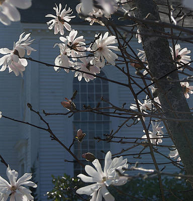 Photograph - White Magnolia With Church Window by Margie Avellino