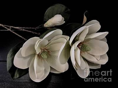 Photograph - White Magnolias  by Jeannie Rhode
