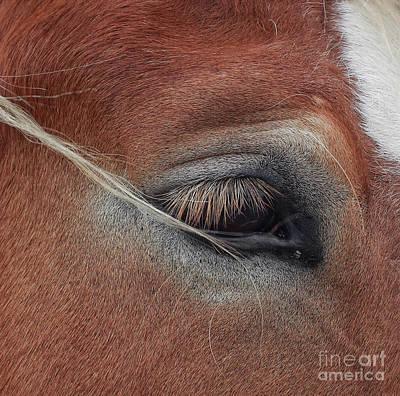 Photograph - White Mane's Eye by Toma Caul