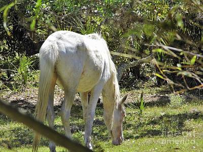 Photograph - White Mare by D Hackett