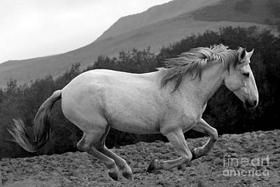 Photograph - White Mare Gallops #1 -  Close Up Black And White by Heather Kirk