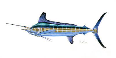 Animals Paintings - White Marlin by Carey Chen