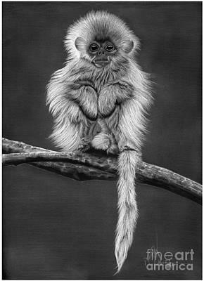 Drawing - White Monkey by Murphy Elliott
