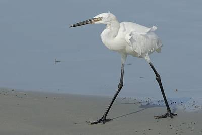 Photograph - White Morph Reddish Egret On Beach by Bradford Martin