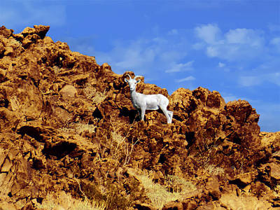 Photograph - White Bighorn Sheep by Alan Socolik