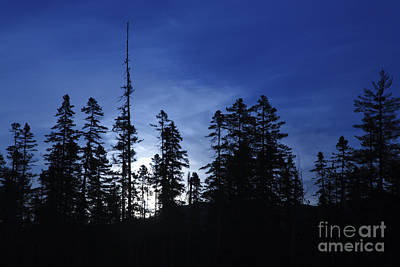 New Hampshire Photograph - White Mountain National Forest - New Hampshire by Erin Paul Donovan