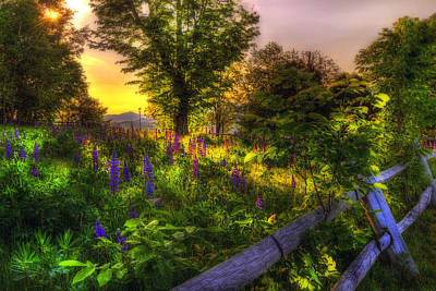 Lupine Photograph - White Mountain Sunrise Over Lupines by Joann Vitali