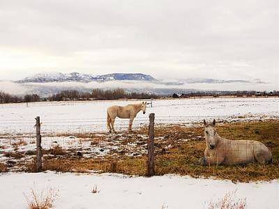 Photograph - White Mule And Winter Horse by Deborah Moen