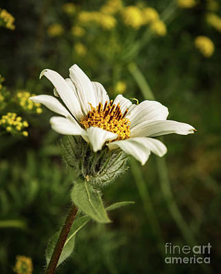 Photograph - White Mule Ears by Robert Bales