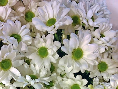Digital Art - White Mums by Jasna Dragun