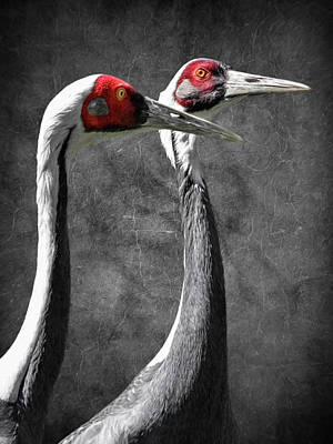 Photograph - White Naped Cranes by Wes and Dotty Weber