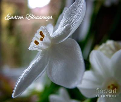 Photograph - White Narcissi Easter Blessings 3 by Joan-Violet Stretch