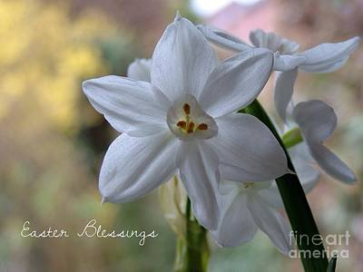 Photograph - White Narcissi Easter Blessings by Joan-Violet Stretch