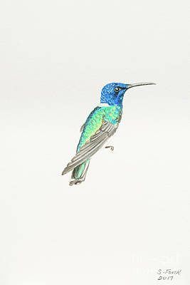 Painting - White-necked Jacobin by Stefanie Forck