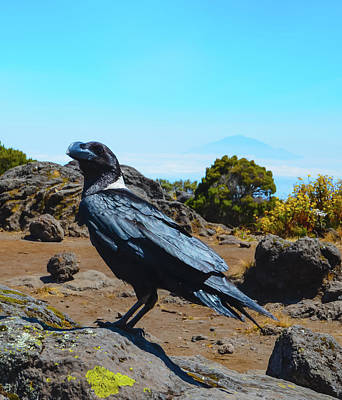 Photograph - White-necked Raven Overlooking Mount Meru by Jeff at JSJ Photography
