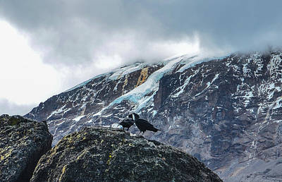 Photograph - White-necked Raven Pair Under Kilimanjaro Summit Glacier by Jeff at JSJ Photography