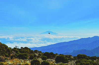Photograph - White-necked Raven Soaring Above Mount Kilimanjaro With Mount Meru by Jeff at JSJ Photography