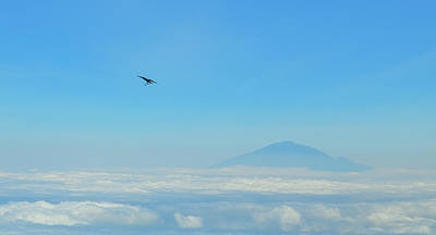 Photograph - White-necked Raven With Twig Soaring Over Mount Meru by Jeff at JSJ Photography