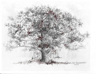 White Oak Print by Jim Hubbard