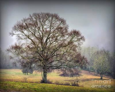 Photograph - White Oak On Camp Creek by Walt Foegelle