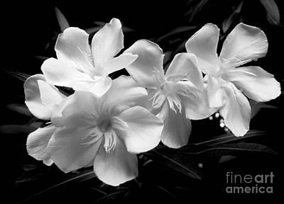 White Oleander Art Print