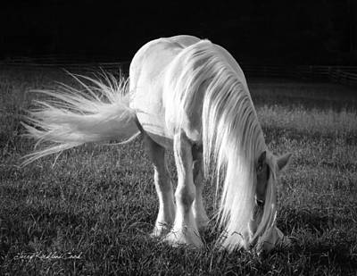 White On Black And White Print by Terry Kirkland Cook