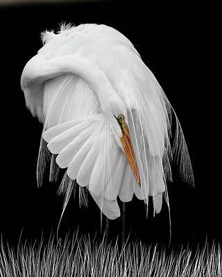 Photograph - White On Black by Wes and Dotty Weber