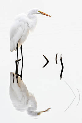 White On White Art Print