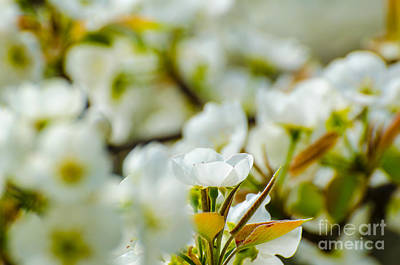 Photograph - White On White by Donna Brown