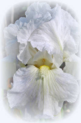 Digital Art - White On White Iris by Kay Novy