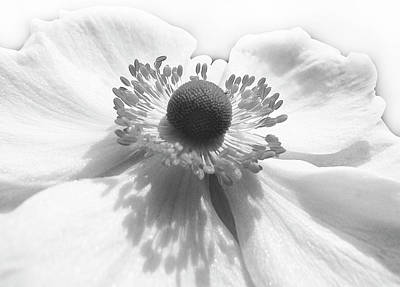 Photograph - White On White by Jacqi Elmslie