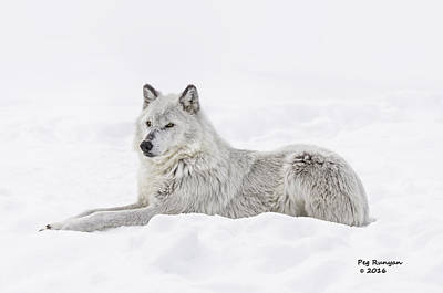 Photograph - White On White by Peg Runyan