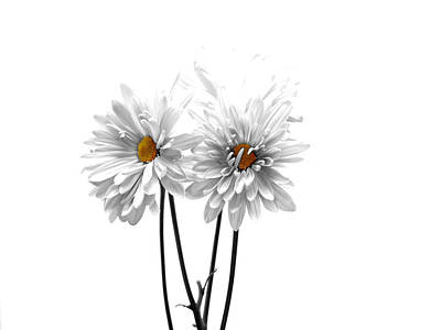 White Daisy Photograph - White On White by Regina Arnold