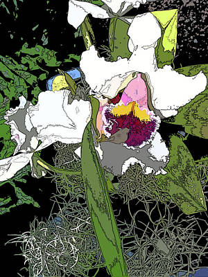 White Orchid Art Print by Adina Campbell