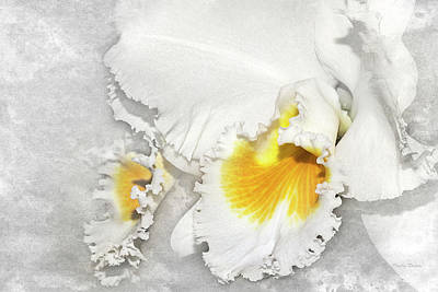 Photograph - White Orchid Beauty by Phyllis Denton
