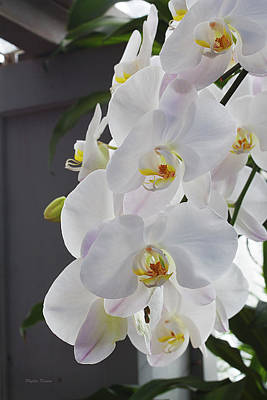 Photograph - White Orchid Cascade by Phyllis Denton