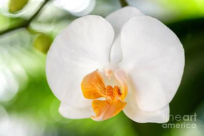 Photograph - White Orchid by Eyzen M Kim