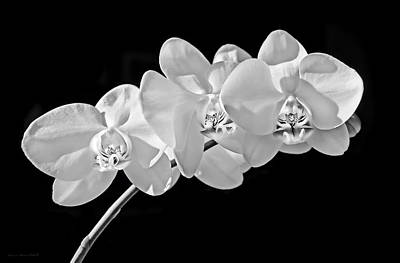 Photograph - White Orchid Flowers Black And White by Jennie Marie Schell