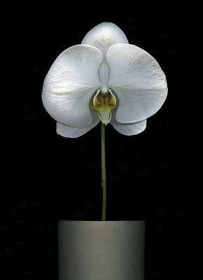 Photograph - White Orchid In A Pot by Christian Slanec