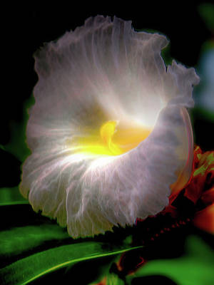 Photograph - White Orchid In Garden by Joseph Hollingsworth