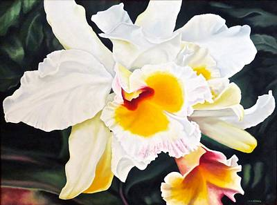 Showy Painting - White Orchid by Janice Petrella-Walsh