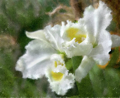 Art Print featuring the photograph White Orchid by John Hix
