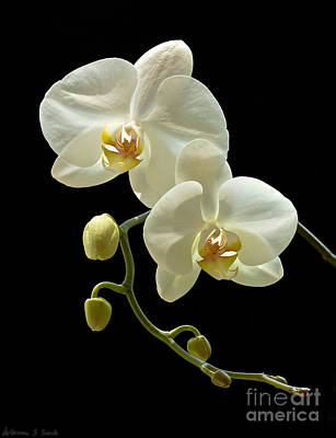Photograph - White Orchid On Black Background by Warren Sarle