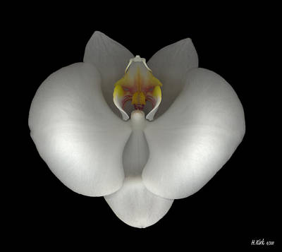 Photograph - White Orchid On Black by Heather Kirk