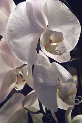 Photograph - White Orchid Portrait by Margie Avellino