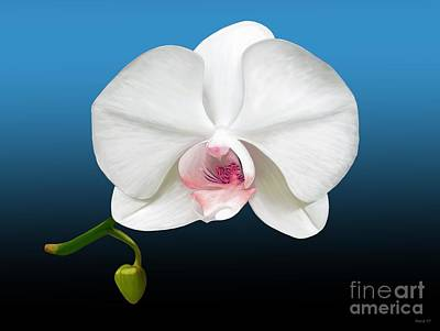Art Print featuring the digital art White Orchid by Rand Herron