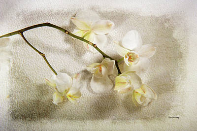 Photograph - White Orchid by Randi Grace Nilsberg