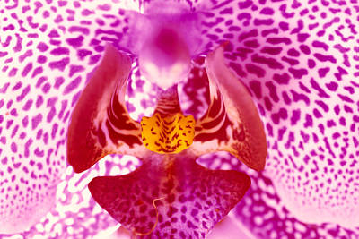 Photograph - White Orchid Speckled by Tomas del Amo - Printscapes
