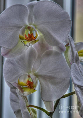White Orchids Art Print by David Bearden