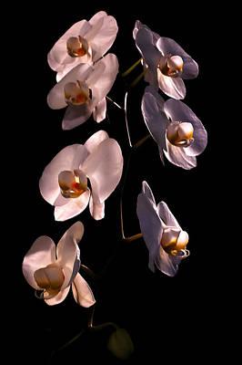 Photograph - White Orchids by David Coblitz